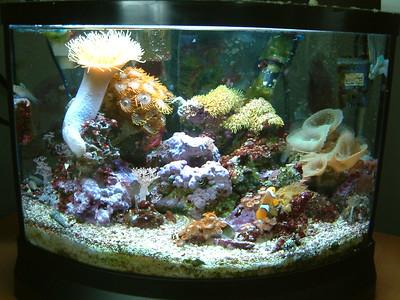 Minibow 7 Office Nano Reef