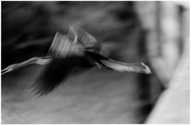flight from frame