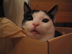 Cat in a box | by Breuls