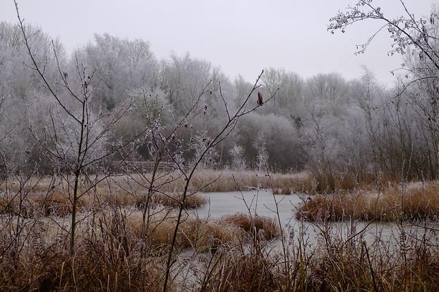 Dans l'étang Saint Ladre, givré par l'hiver