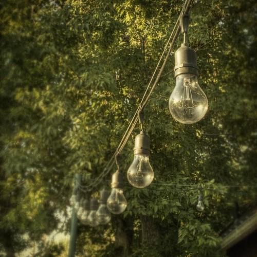 trees summer glass leaves lightbulb bulb square colorado afternoon farm hdr denverbotanicgardensfarm texturesquared canont1i bulbline