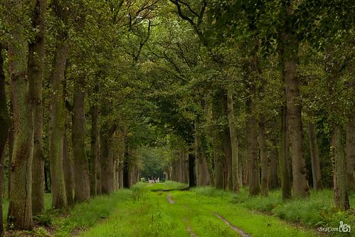 summer tree nature grass fairytale forest fence walking leaf bomen woods gate groen branches pad logs boom zomer lane bos walkers takken laan sprookje paadje boomstammen wandelaars sprookjesachtig bracom bramvanbroekhoven