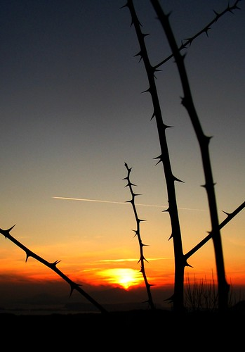 trees sunset sky sun alberi tramonto trails loureed cielo spine spines sole scie