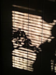 January Shadows | by Tweygant