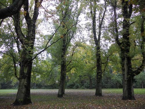 On the Vondelpark   by Bibi
