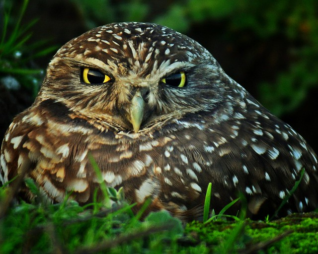 Ground view of owl