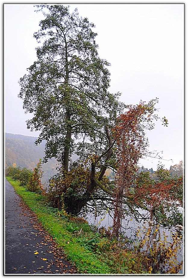 arbre le long de la voie verte