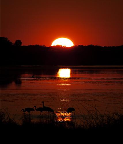 park sunset river state bell florida cranes kris sarasota kristian sandhill myakka