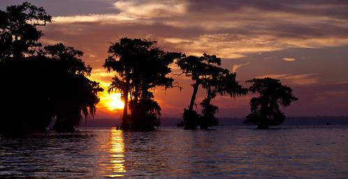 tree water sunrise canon louisiana atchafalaya basin swamp canon70200 5dmarkii 5d2 basinkeeper