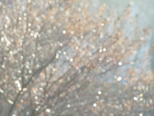 morning bush bokeh branches sparkle dew glistening bokehlicious