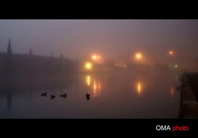 The magical beauty of the fog./ La mágica belleza de la niebla.