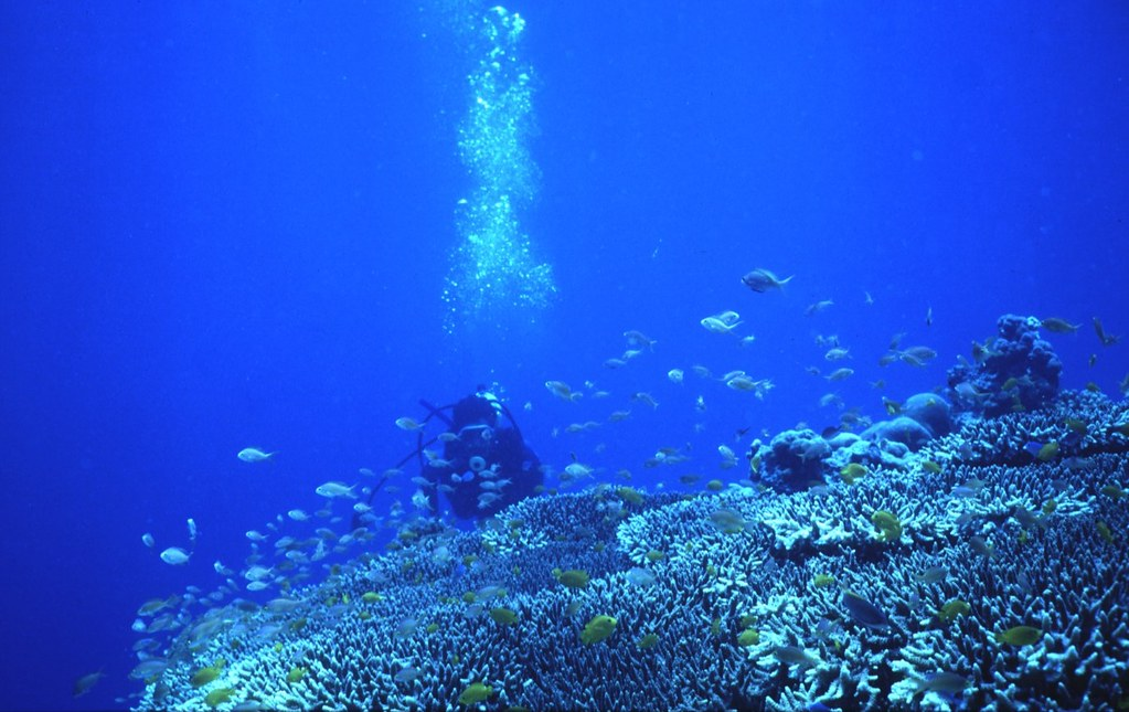 Philippines Reef Dive