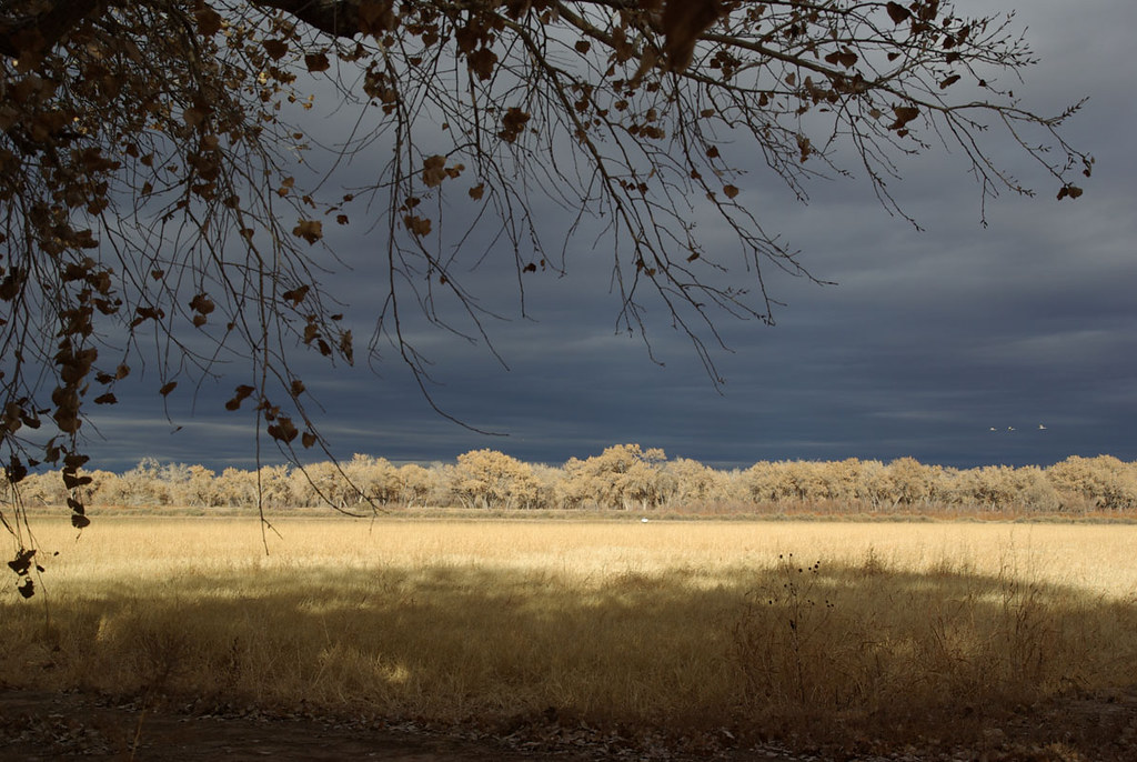 Bosque del Apache National Wildlife Refuge, New Mexico, USA.