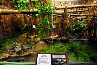 dwarf crocodile enclosure | by markusOulehla