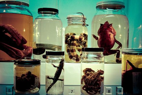 Untitled   by Beaty Biodiversity Museum
