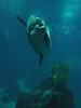 Mola mola, foto: Petr Nejedlý