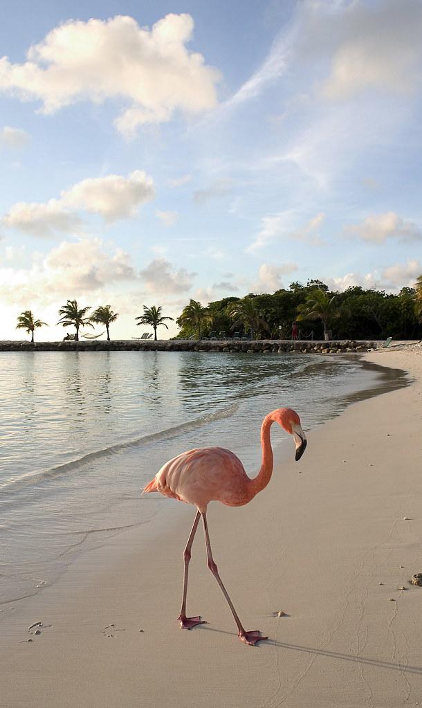 Ving Aruba