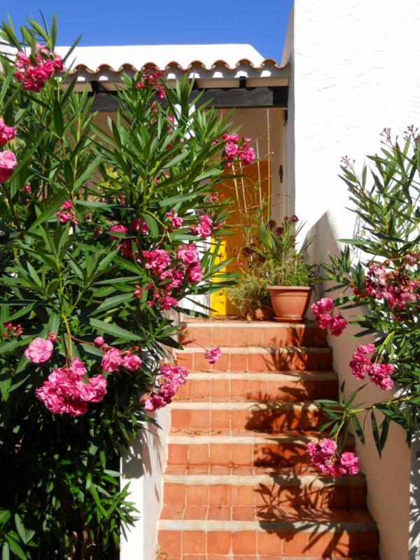 Subida a terraza decorada con adelfas