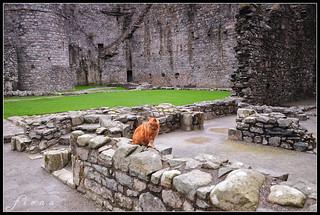 Harlech Castle Cat 1