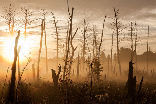 mist sunrise dawn goldenhour shadows silhouette newengland autumn fall canon5dmarkii