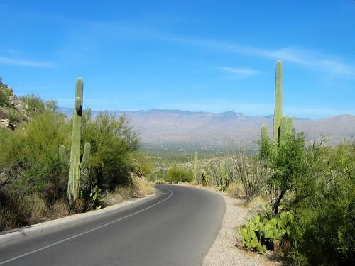 2011 Calendar saguaro-1