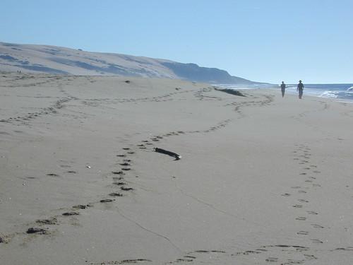 Central Coast Beach Walkers