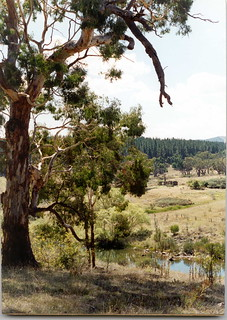 Kowen Forest across the Molongo River to Colverwell ruins & pine plantation.