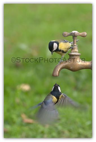 Abre el grifo que voy - I open the faucet.