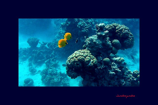 Ah che fortuna vivere insieme, in fondo al mar! Oh how lucky to live together under the sea!