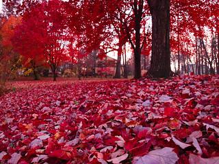red november | by porschelinn