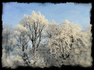 Frost Trees | by troutcolor