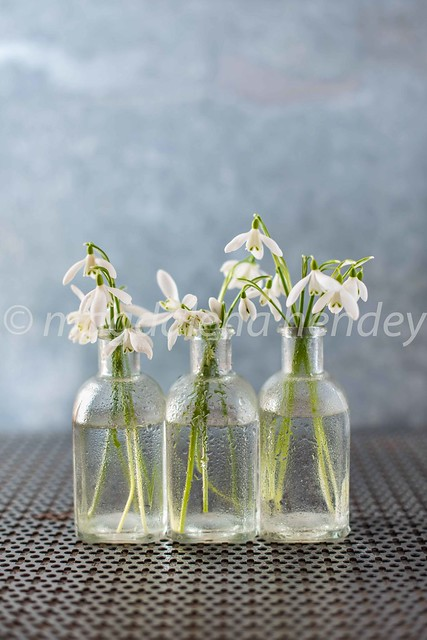 snowdrops from the garden