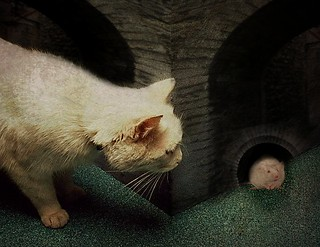 Hide little fella!!  -  Cat & Mouse | by Soskimjau