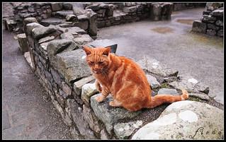 Harlech Castle Cat 2