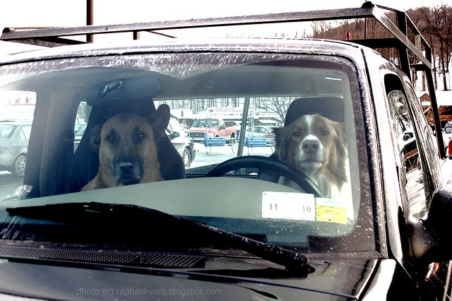 What........What's the Matter?  Never seen a couple of dogs driving a pickup truck?