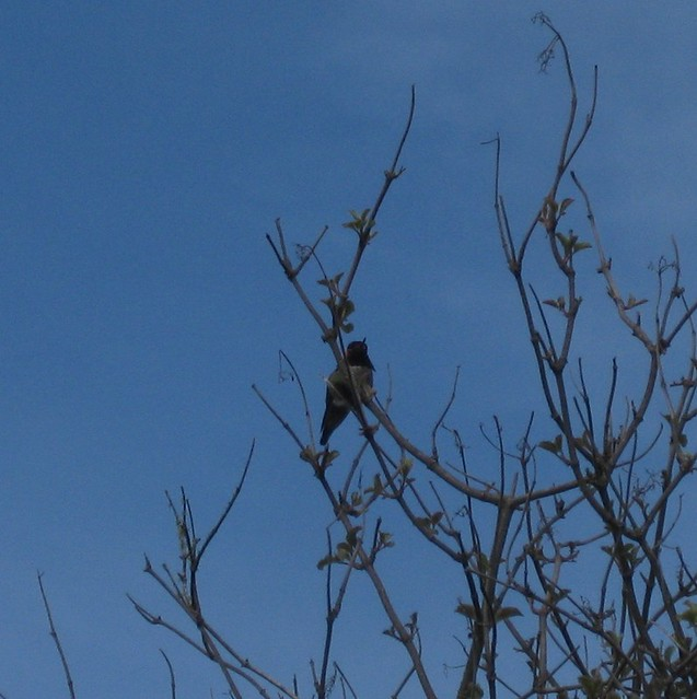 IMG_1942crop to hummingbird
