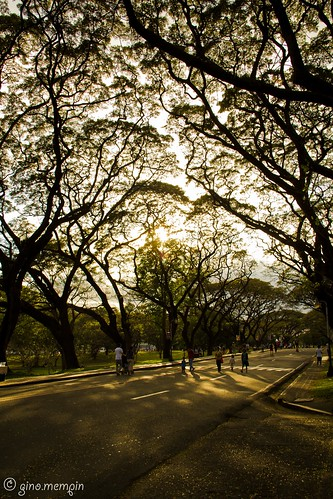 road trees sunrise universityofthephilippines
