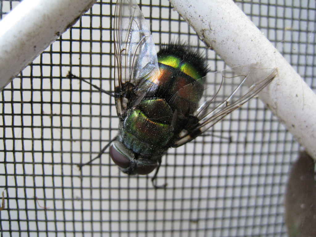 Fly on screen