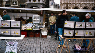 Bird Market, Grand-Place