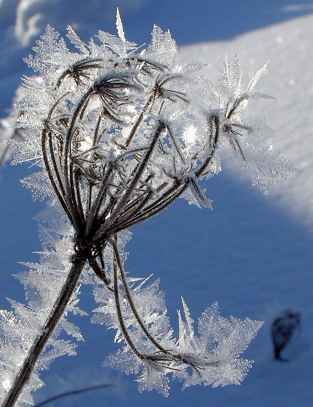 ~Nature's Winter Jewels~