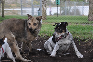 Ugghh! DIRT is the word at the Dog Park! | by Natures Paparazzi