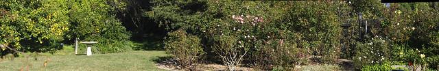 K1053309_8 110105 Goleta backyard roses lemon daylily ICE rm stitch compr10