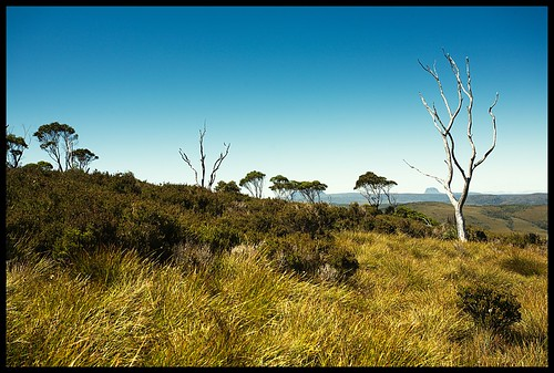 Tasmanian landscape | by pallotron