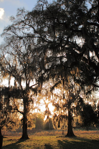 sunset moss florida spanish brooksville