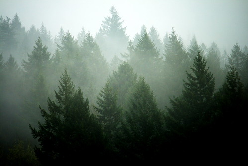 mist tree fog oregon portland 41 4142p