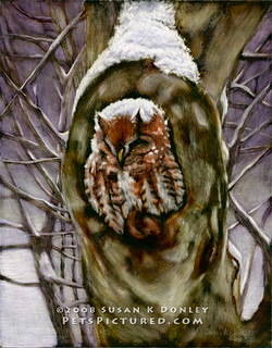 Peace in the Storm - Eastern Screech Owl | by Susan Donley