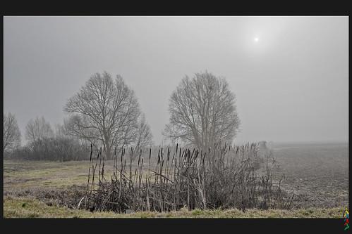 alberi campagna sole nebbia inverno canne campi ferraraterraeacqua
