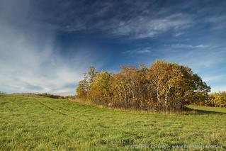 Aspens in autumn, Qu'Appelle Valley | by Branimir Gjetvaj