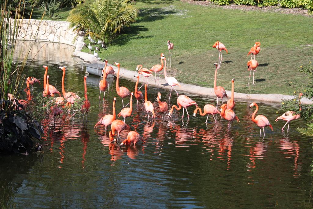 Jungle Island - Miami FL