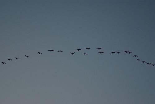 park blue sunset sky nature birds georgia outdoors evening flying geese pentax dusk line migration crookedriver k10d crookedriverstatepark tamronaf70300mmf456dildmacro photobymikewacht